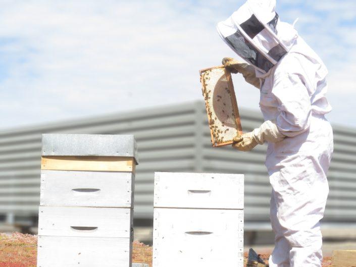 Location de ruches en entreprises