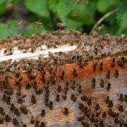 ruches peuplées pour professionnels
