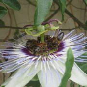 Installation de ruches en entreprise