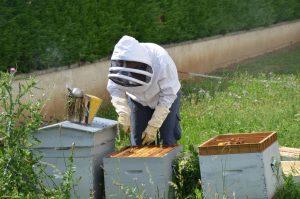 Installation de ruches pour particuliers