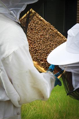 Visite de rucher en entreprises
